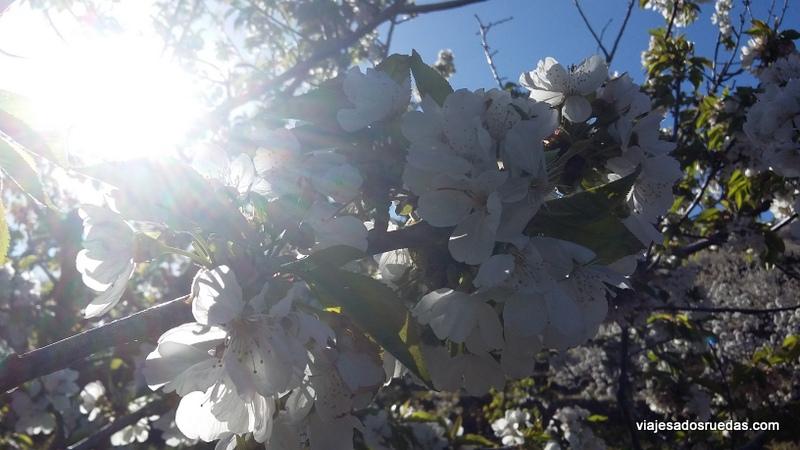 El Valle del Jerte. Cerezos en Flor